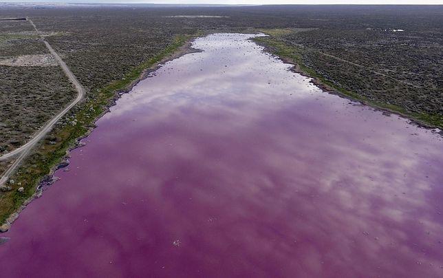 Laguna Corfo często ulega zanieczyszczeniom