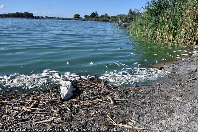 Legnica. Tony śniętych ryb na brzegu jeziora Koskowickiego.