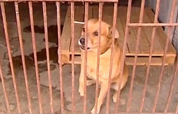 Psa i jego właściciela brutalnie rozdzielił los. Mężczyzna trafił do Domu Pomocy Społecznej, a jego pies do schroniska