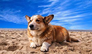 O czym należy pamiętać, decydując się na wakacje z psem?