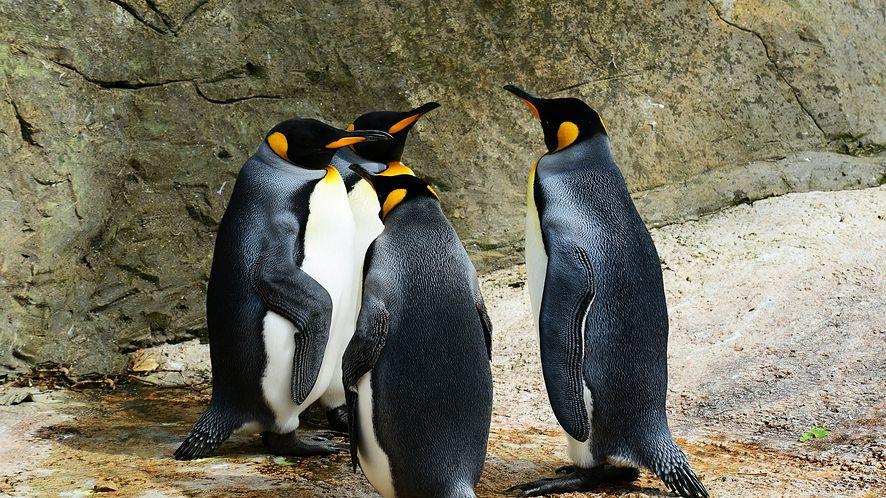 Mówią, że Linux ma już 3% rynku. Czy chcecie Linuksa w bazie dobrychprogramów? #sonda