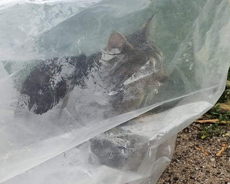 Kierowca zrobił coś okropnego. Świadek nie wytrzymał i pokazał zdjęcie