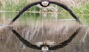Największe wrażenie na Stevie robi to, jak ptaki polują i wchodzą w interakcję z innymi zwierzętami