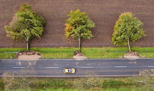 Drzewa powalone przez orkan Ksawery. Zdjęcie wykonane dronem