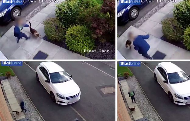 Pięciolatek znęca się nad kotem, policja odmawia wszczęcia postępowania