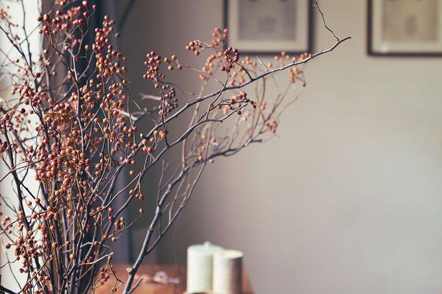 Amerykański sklep sprzedaje wiązkę gałęzi za 200 zł
