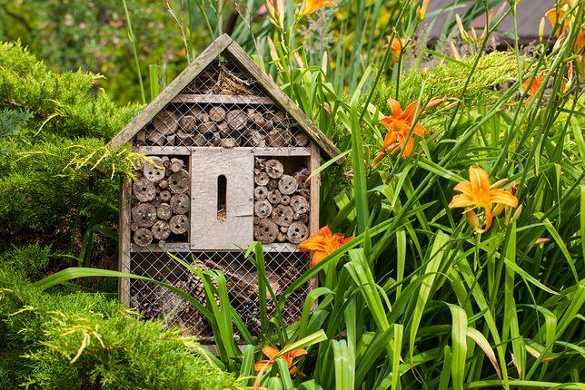 Domek dla owadów z łatwością wykonasz z elementów, które znajdziesz w ogrodzie