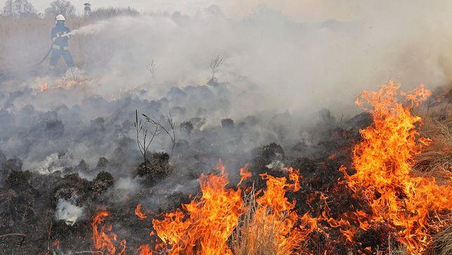 Obszar, który dotychczas strawił ogień, liczy ponad 1,5 tys. ha