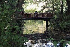 Ze stawów w parku Sołackim wyłowiono 150 kg śniętych ryb. Co zatruło wodę?
