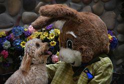 Wielkanoc 2021. Śmigus-Dyngus i inne zwyczaje
