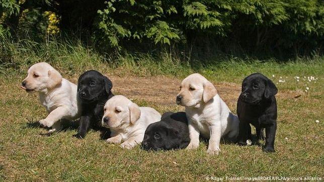 Niemcy chcą mieć psa. Prawdziwy boom