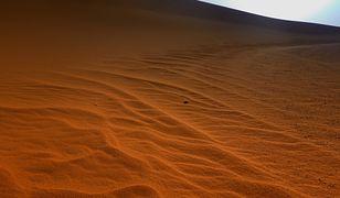 Sahara. Niesamowite odkrycie polskich naukowców