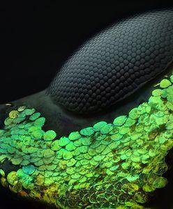 Niesamowite zdjęcia natury w skali mikro
