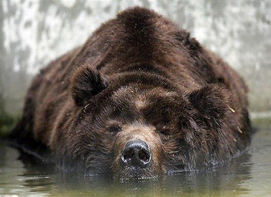 Niedźwiedź zabił turystę w Yellowstone