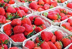 Susza w Polsce. Ceny truskawek wysokie jak nigdy, przygotuj portfel na spory wydatek
