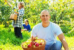 Pracownicy z Ukrainy pomagają polskim sadownikom (WIDEO)