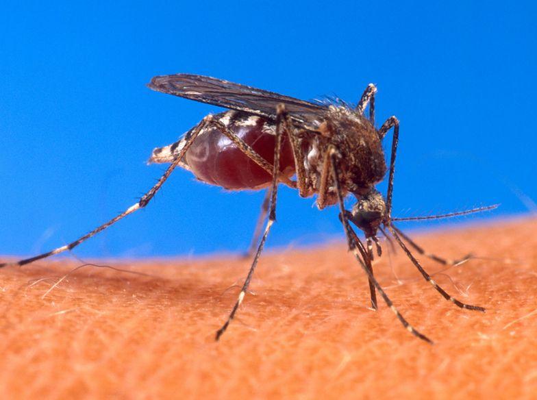 Groźny tropikalny wirus w Europie. W Holandii pierwszy przypadek
