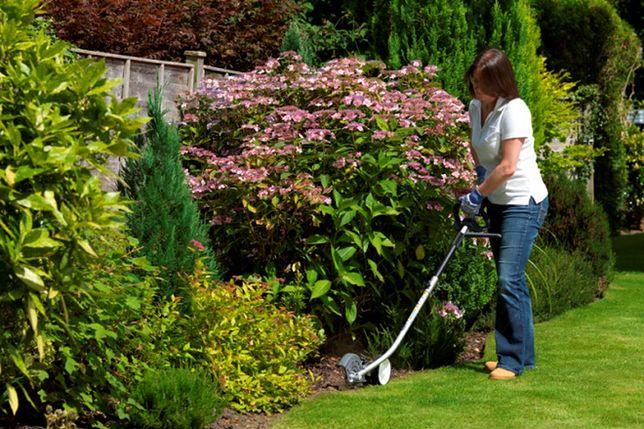 W ciągu dwóch pierwszych wiosennych tygodni ogród całkiem zmienia szaty – pojawia się zieleń i paleta barw kwitnących drzew, krzewów oraz kwiatów.