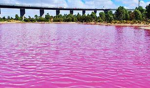 Okazuje się, że różowa barwa wody jest tylko tymczasowa