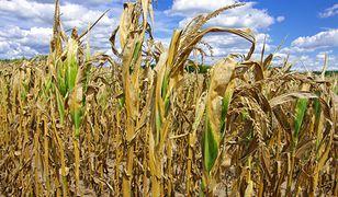 Krajowy Rejestr Długów: zadłużenie w sektorze rolniczym sięga 412,5 mln złotych