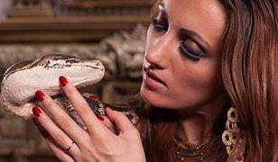 Egzotyczny gad został wykorzystany jako element erotycznej sesji na plaży w Wilanowie.