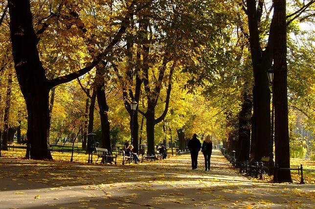 Jesień w parku będzie wyjątkowo ładna w tym tygodniu