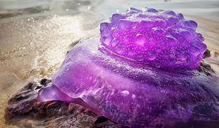 Meduza najprawdopodobniej nie poradziła sobie z silnymi prądami morskimi