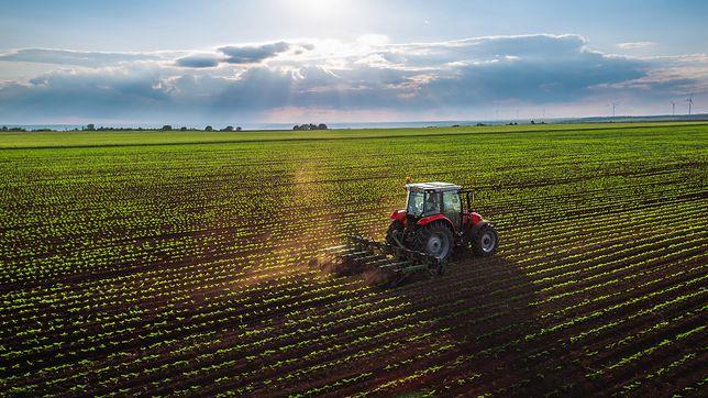 Rolnictwo zabije ludzkość? Pojawił się nowy grzyb