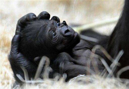 Małe cudo z praskiego zoo - zobacz zdjęcia