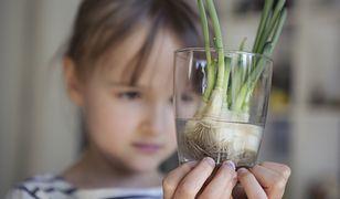 Te warzywa i zioła możemy wyhodować w domu