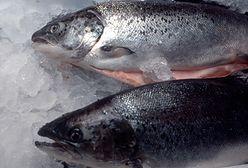 Norwegia. Miliony łososi padły z powodu kwitnienia alg. Ceny idą w górę