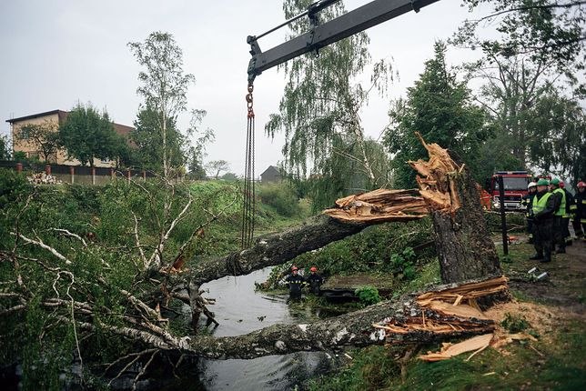 38 tys. ha lasów uległo zniszczeniu w wyniku nawałnic