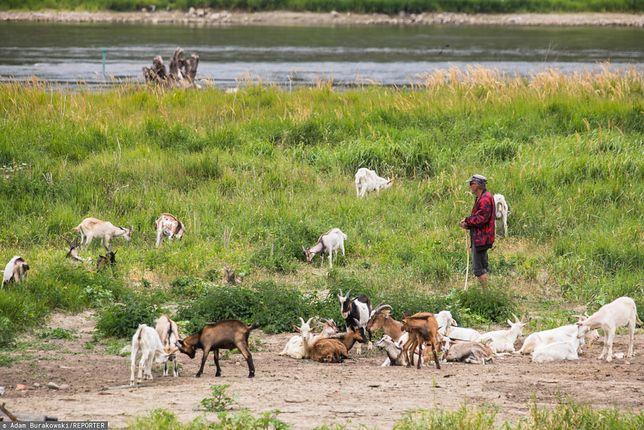 Martwe kozy na warszawskiej wyspie. Abdullah K. zabrał głos