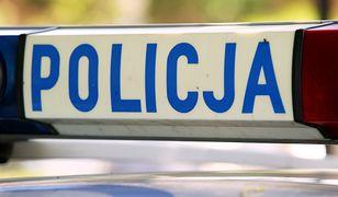 Policja czeka na sekcję zwłok psów