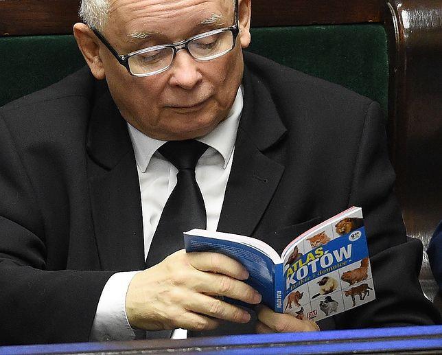 """Piątka dla zwierząt. Jarosław Kaczyński czyta """"Atlas Kotów"""" podczas obrad Sejmu"""
