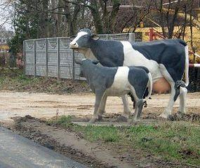 Uwaga! Plastikowe krowy na drodze