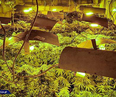 Opole. Ukrył plantację marihuany pod ziemią