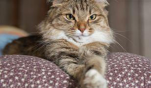 Lubisz koty? Sprawdź, co o nich wiesz