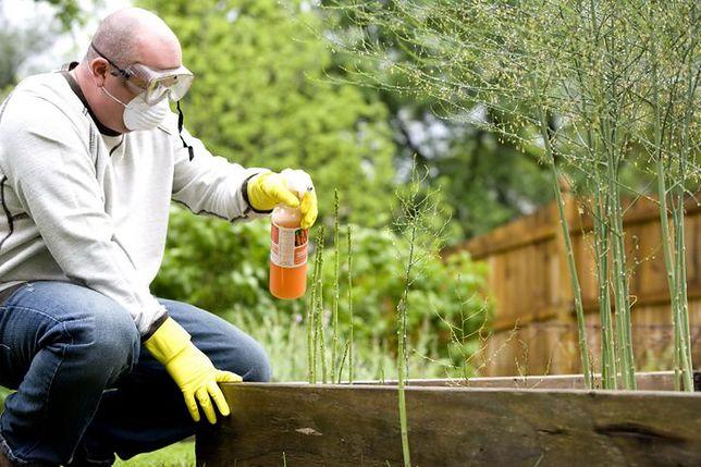 Środki owadobójcze lub grzybobójcze rozpyla się dzięki opryskiwaczom
