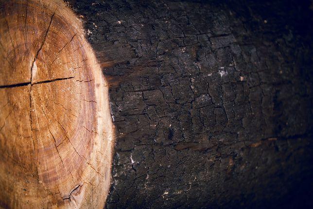 Elewacja z czarnego drewna. Tradycyjna metoda z Japonii robi wrażenie