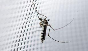Moskitiera zamyka drogę owadom, ale ich nie zabija