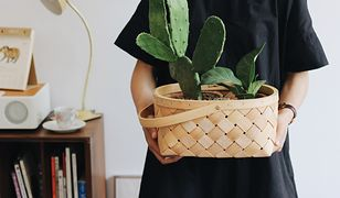 Niektóre gatunki kwiatów i roślin doniczkowych wpłyną na jakość powietrza w domu