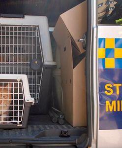 Warszawa. Kot uwięziony w rurze. Ratowało go kilkanaście osób