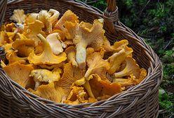 Sezon na kurki. Jak przyrządzić te zdrowe i smaczne grzyby?