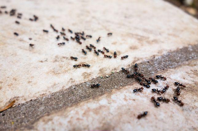 Mrówki inspiracją