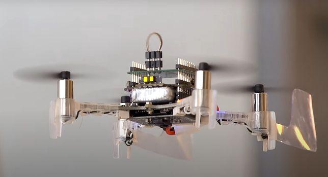 Armia USA otrzyma biohybrydę drona z ćmą