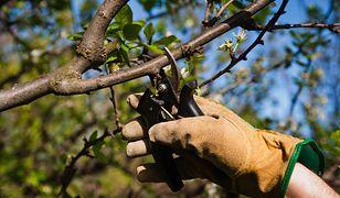 Wczesna wiosna to nie tylko najlepszy czas na porządki w ogrodzie, lecz także na zakup roślin.