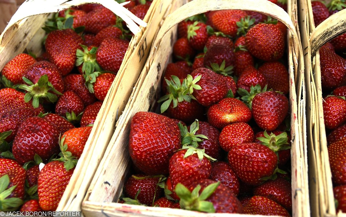 Po teście pestycydowym czas na test wagowy. Sprawdzamy, czy sprzedawcy truskawek nas oszukują