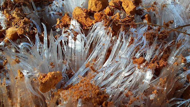 """Lód włóknisty nazywany jest """"lodowymi włosami"""""""