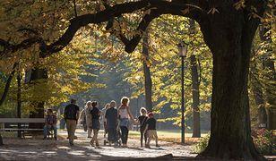 Warszawa, Ogród Saski. Alejki spacerowe wśród drzew w parku